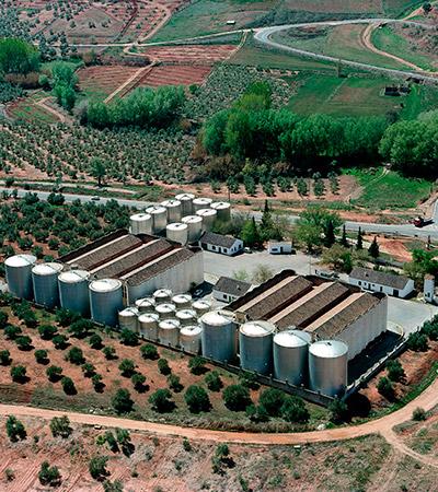 almacen de aceite de oliva