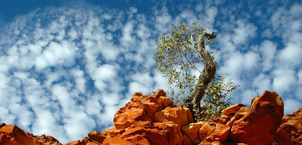 El aceite de oliva de Andalucía, a la conquista de Australia