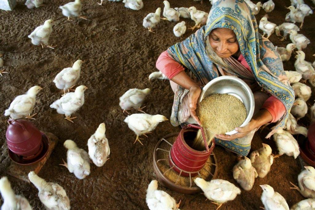 Hambre Cero, objetivo de la Cumbre Mundial contra el Hambre y la Malnutrición