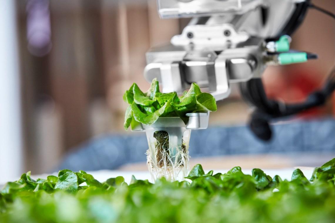 ¿Robots en lugar de granjeros? La tecnología invade los cultivos