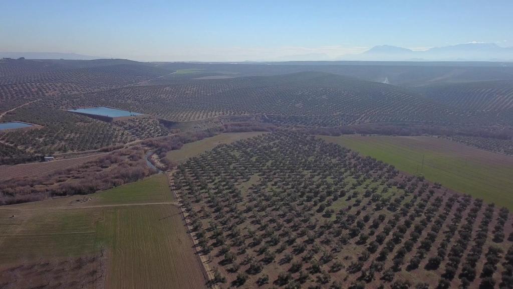 Planas destaca la relevancia del olivar en un acto conmemorativo del Día Mundial del Olivo