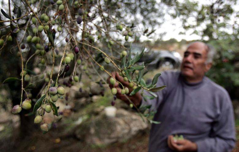 La agricultura familiar, beneficiaria de las ayudas de la PAC post 2020, según Planas
