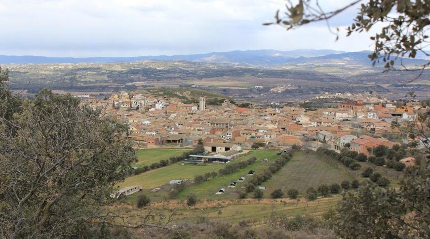 Somontano presenta 438 marcas de aceite de oliva