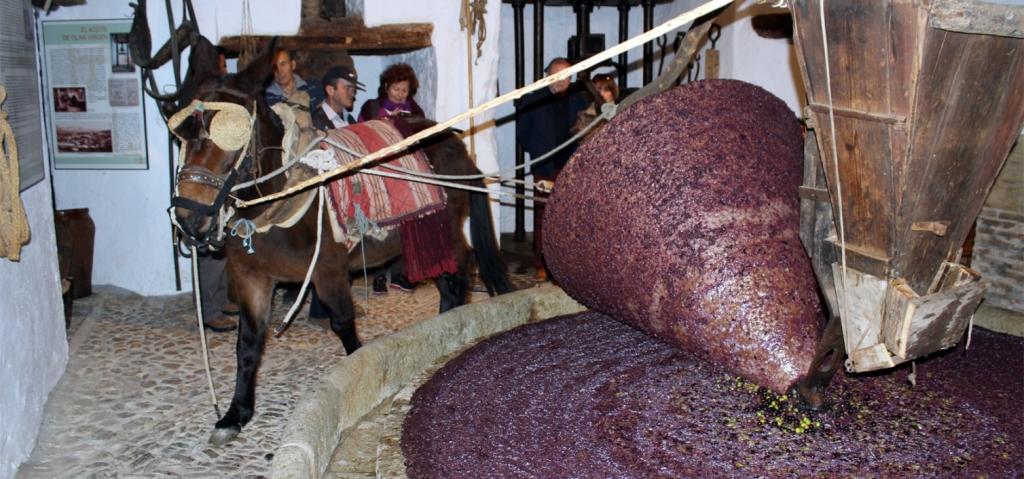 Riogordo celebra su tradicional Fiesta de la Molienda